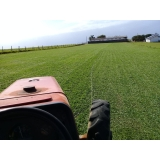 onde encontro fornecedor de grama em campo Hortolândia