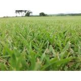 onde encontro fornecedor de grama esmeralda São José do Rio Preto