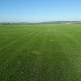 onde encontro fornecedor de grama para campo de futebol Brasília