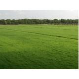 onde encontro plantio de grama bermuda Jaboticabal