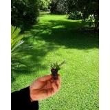 onde encontro plantio de grama em mudas Boa Vista