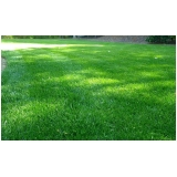 onde tem distribuidora de grama esmeralda folha fina Itu