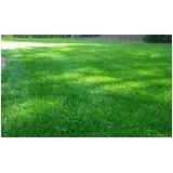 onde tem distribuidora de grama esmeralda folha fina Campo Grande