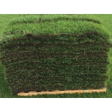 onde vende tapete de grama esmeralda Presidente Prudente