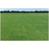 onde vende tapete de grama para campo Araçatuba