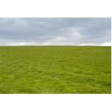 orçamento de grama de campo grande Franca