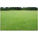 plantio de grama esmeralda Valinhos