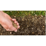 plantio de grama por semeadura orçar Paulínia