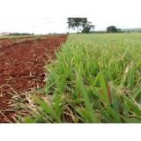 plantio de grama valor Limeira
