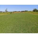 plantio de grama em campo