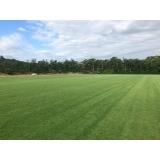 procuro por fornecedor de grama em campo de golf Amparo