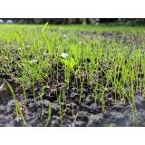 quanto custa plantio de grama por semeadura Vitória