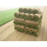 rolo de grama bermuda orçamento Limeira