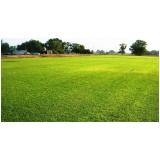 rolo de grama para paisagismo orçamento Campinas