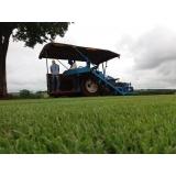 serviço de instalação de grama em campo Americana