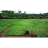 tapete de grama natural para campo Bragança Paulista