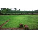 tapete de grama natural para campo Campinas