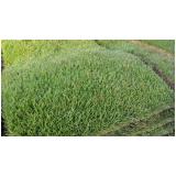 tapete de grama natural para decoração Araras