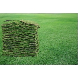 tapete de grama verde Marília