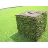 tapetes de grama de qualidade Jaboticabal