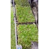 tapete de grama verde