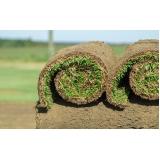 venda de rolo de grama esmeralda Atibaia