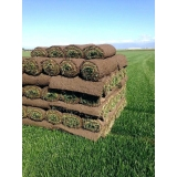 venda de rolo de grama para jardim Araras
