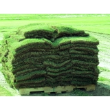 venda de tapete de grama de qualidade Itapetininga