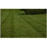 venda de tapete de grama para campo Belém